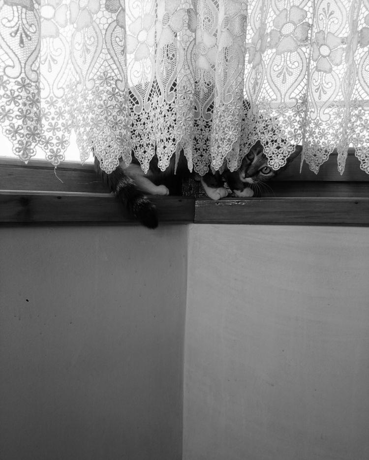 Cat, HideAndSeek, BlackAndWhite - solos | ello
