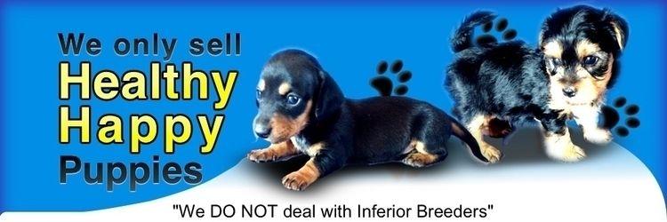 Beagle Sale Queensland: complet - puppypalace | ello