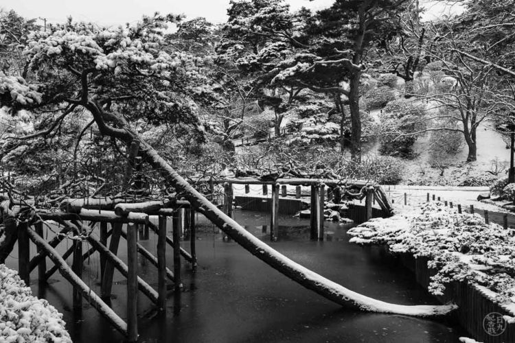 Park - Akita, Senshu, tree, Japan - nickpitsas | ello
