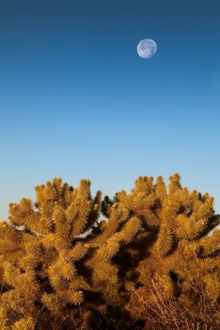 moon descends Sonoran Desert, M - toddhphoto | ello