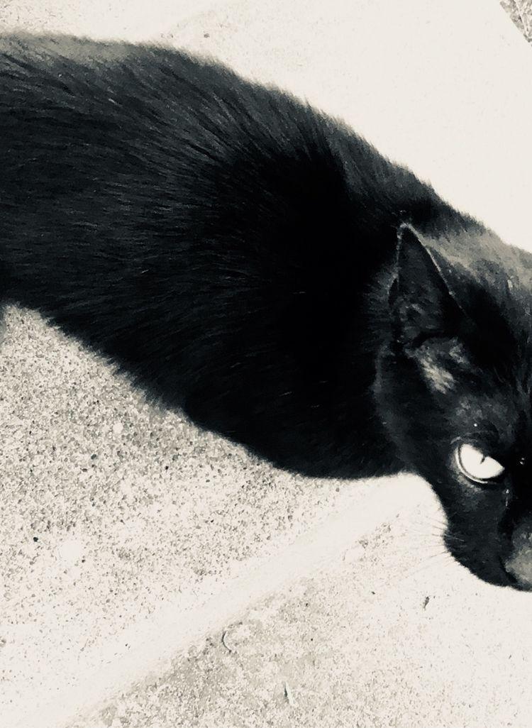 Stray cat - katemoriarty   ello