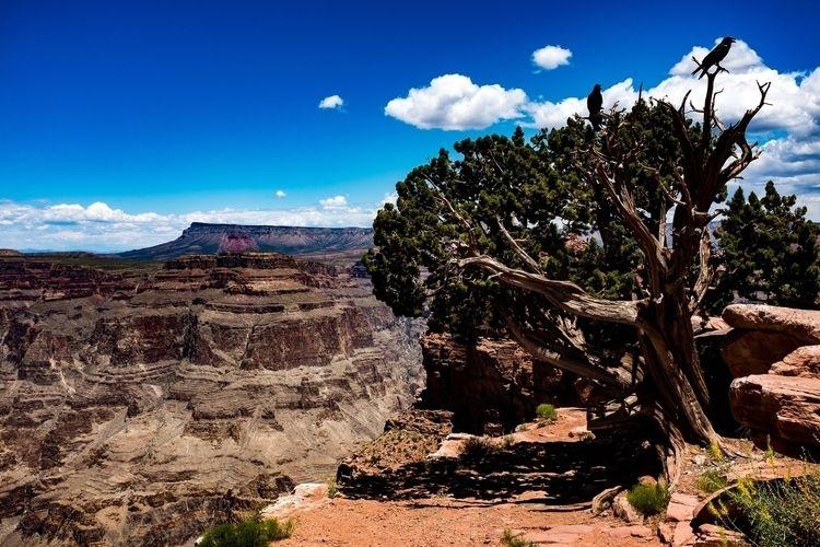 Crows Tree visit Grand Canyon - FujiX100s, - johnnyg_photography | ello
