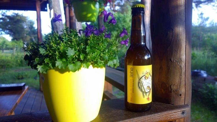 drinking dragon piss beer. pret - norre01 | ello
