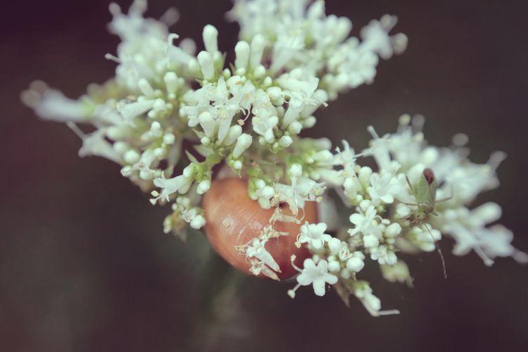Duo - photography, snail, bug, macro - marcushammerschmitt | ello