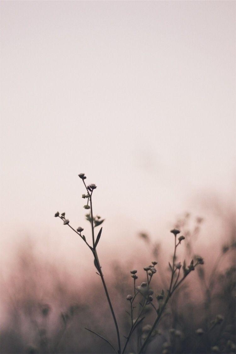 flowers, canon, photography - mathpoulain | ello