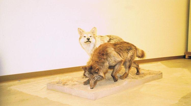 (Photo Doris Diaz) <3 - wolves - dorisdiaz | ello
