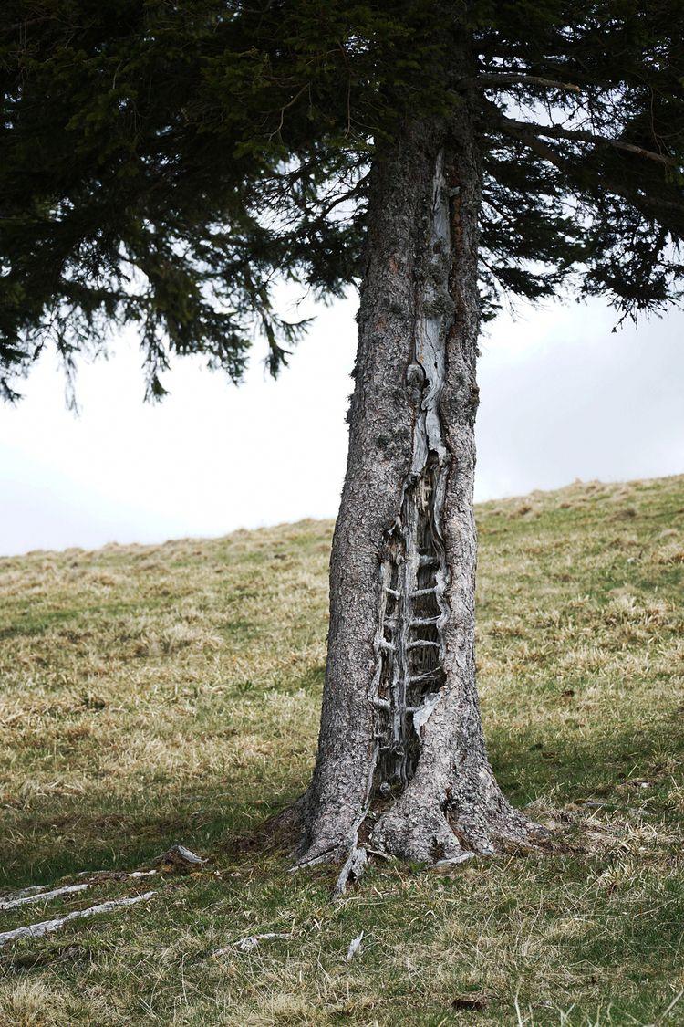 Tree tote mann black forest - taiban | ello