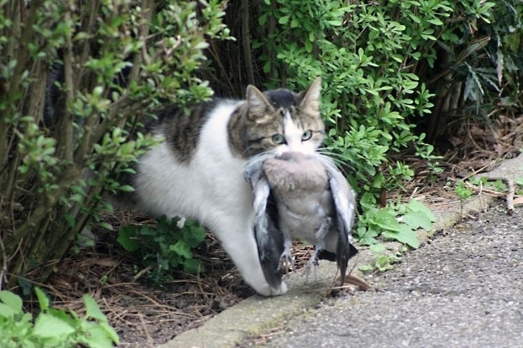 CatDove - taiban   ello