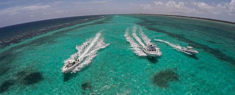 Grand Cayman Scuba Diving Turtl - caymanturtle | ello