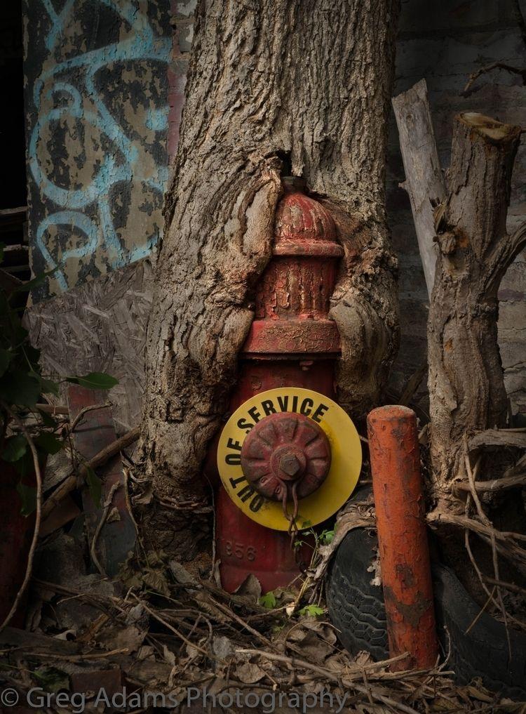 Nature wins. Abandoned Packard  - gregoryadams | ello