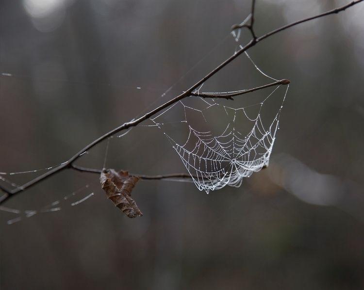 SpiderWeb, Nature, Web, Wild - lucilebe | ello