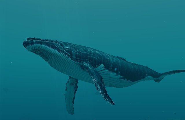 Beneath surface awareness, whal - brianbaruch | ello