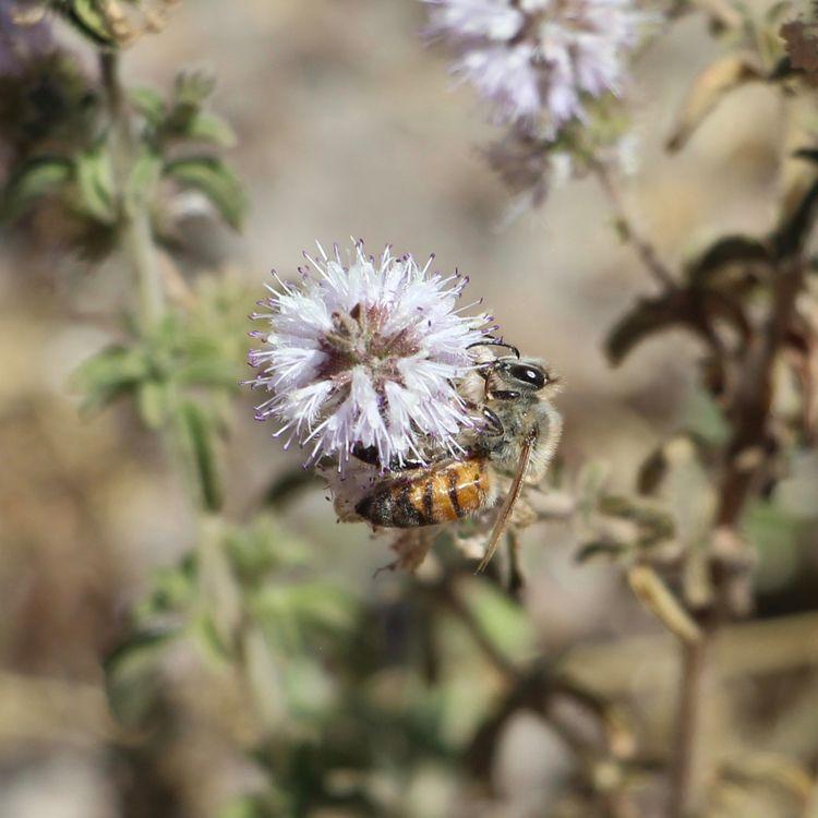 Honey Bee Butterfly - phoenixk | ello