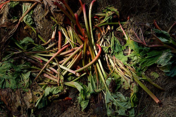 rhubarb Füllhorn pile - photography - marcushammerschmitt | ello