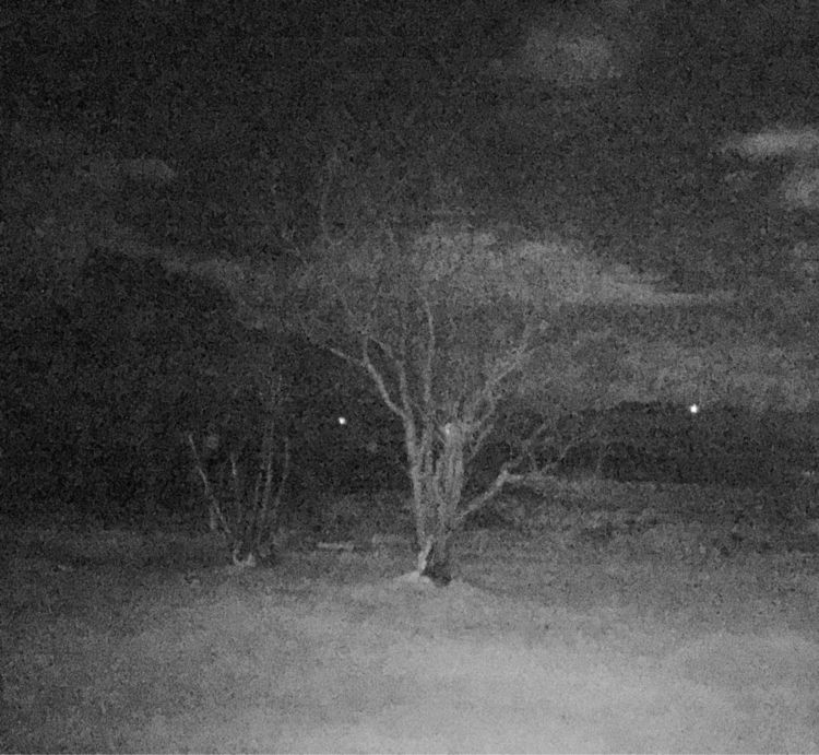 Noct - visao, nocturna, tree - loskarf | ello