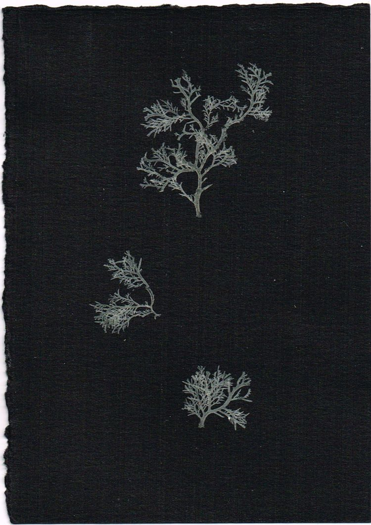 Seaweed, sun bleached pressed - seaweed - christinamriley | ello