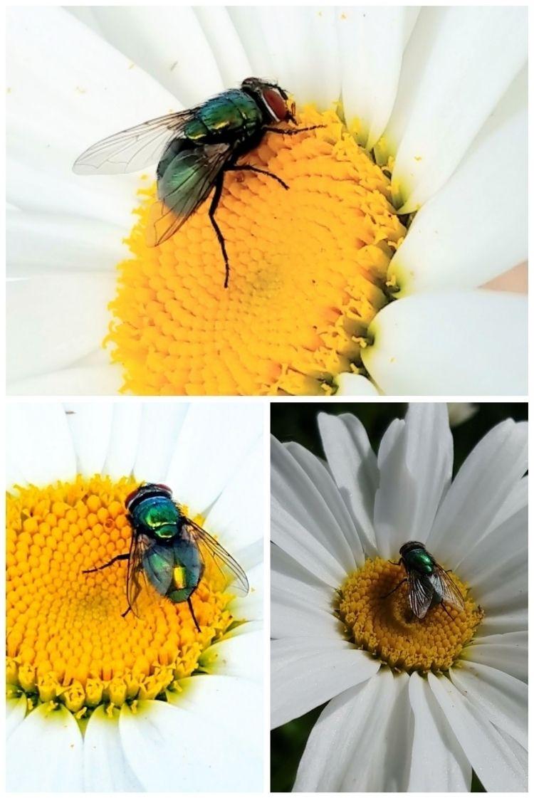 Bob flies named reason - photography - saysaphotography | ello