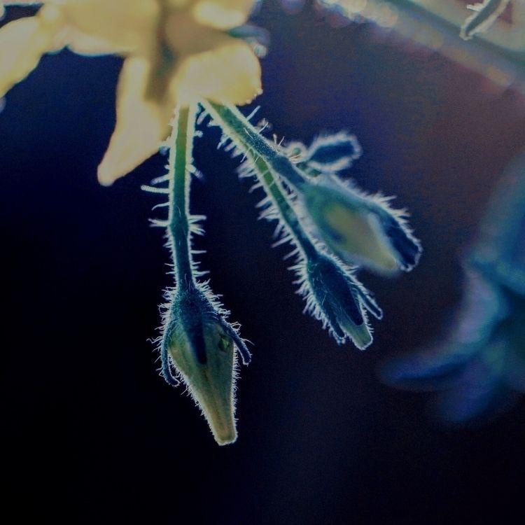 Yellow Green - photography, photo - saysaphotography   ello