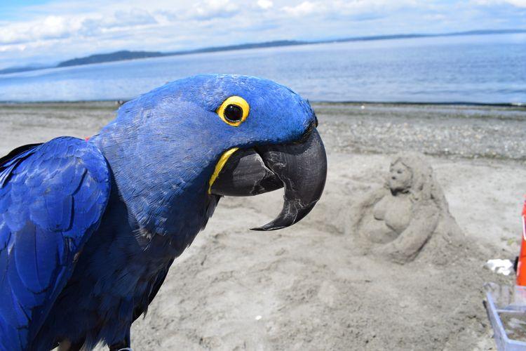 Mermaid lounging Alki Beach che - michaelostrogorsky | ello