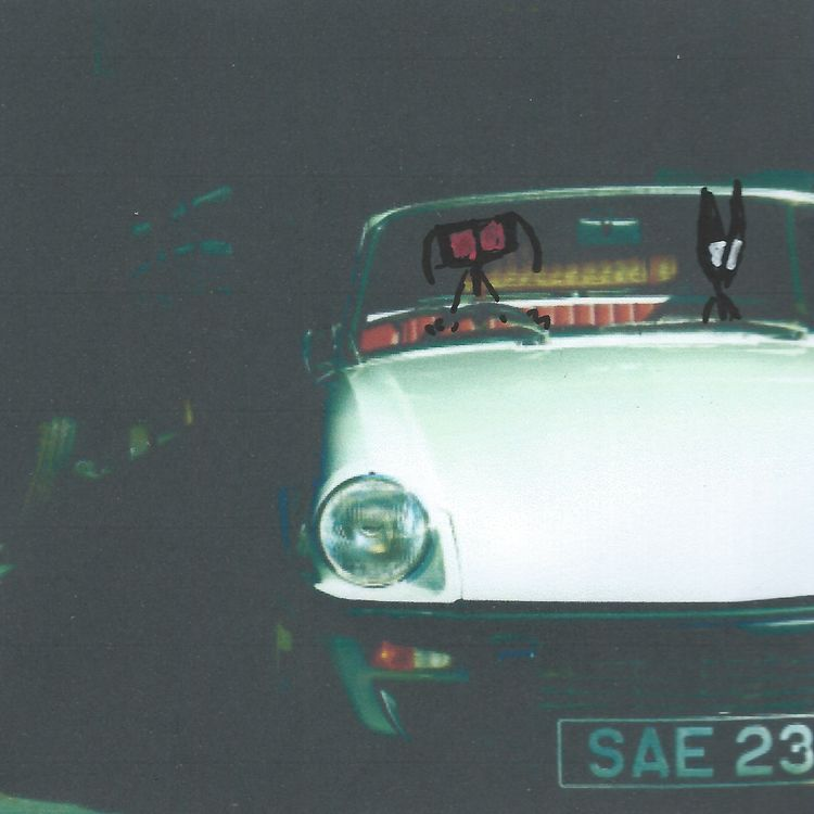 real cats Sally, opening car do - littlefears | ello