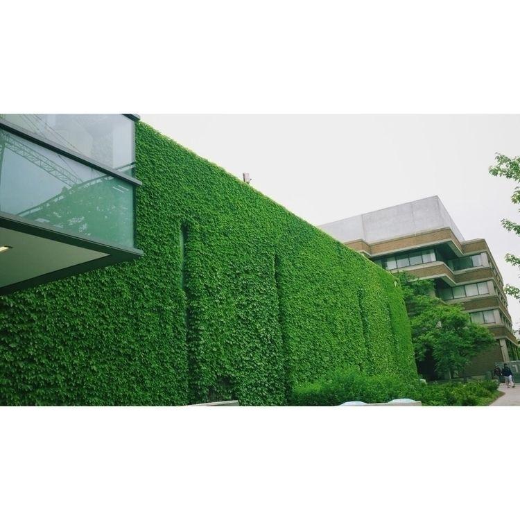 Plant Wall:herb - York, Keele, nature - fallenkittie   ello