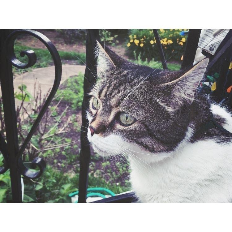 King James:seedling - cat, film - fallenkittie | ello