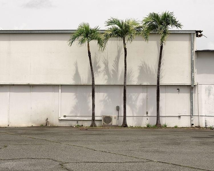Palm Trees - honolulu, hawaii, newtopographics - shanesakata | ello
