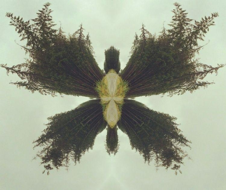 Tree moth mixed media Winston R - winstonrosewater | ello