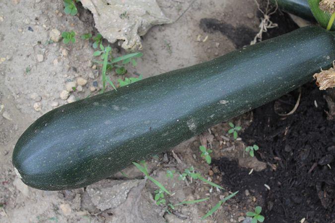 harvesting vegetables future. i - ejfern28 | ello