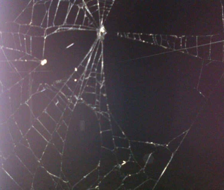 July 17th 2018 Spider web edite - awesomesubt | ello
