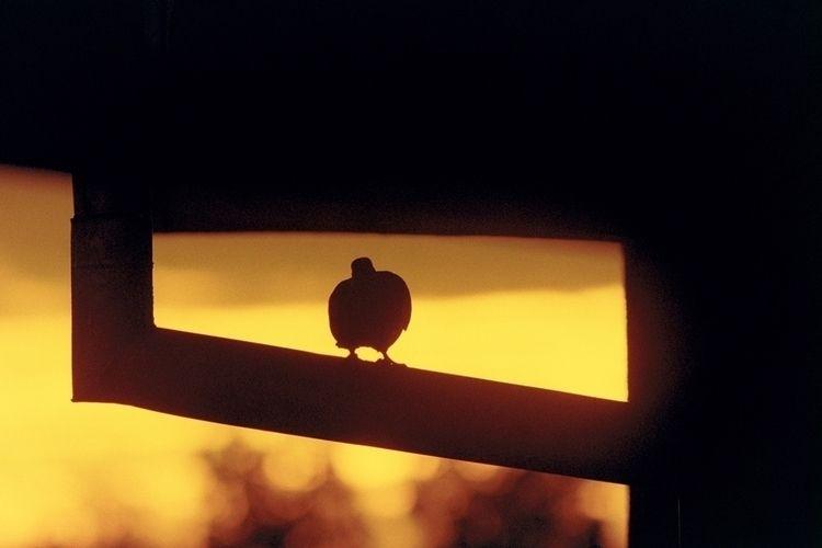 Gummary dovway Canon EOS33 (bod - _sasso | ello
