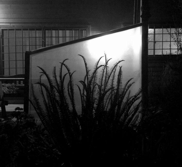 Garden night - photography, farn - ivop   ello
