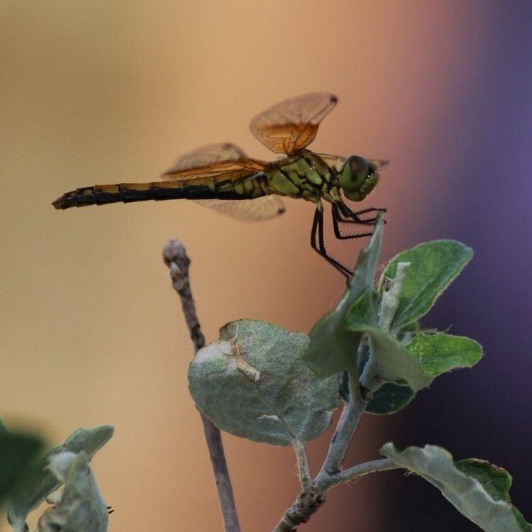 Green Machine - dragonfly - introleftedness | ello