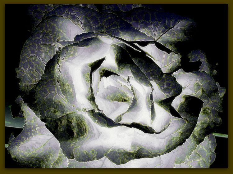capturing moonlight garden - nature - voiceofsf | ello