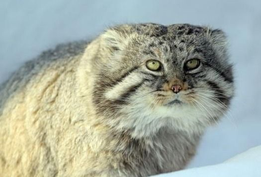 Feline sensitivity feline excep - mariamhenderson | ello