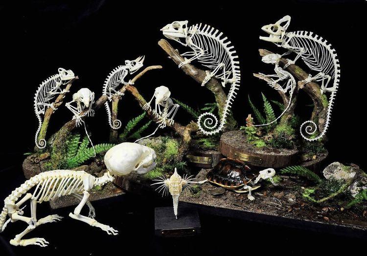 bare bone sculptural art chanet - ronbeckdesigns | ello