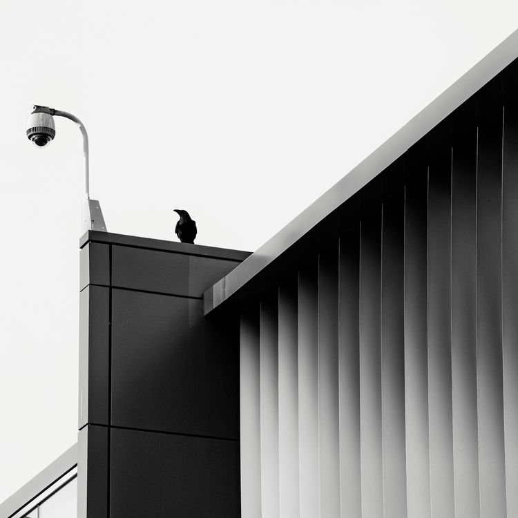 Oversight - crow, camera, blackandwhite - jeff_day | ello