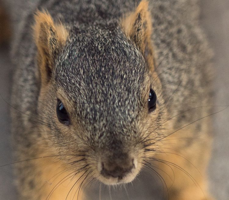 Acting squirrelly - rstarcaptures | ello