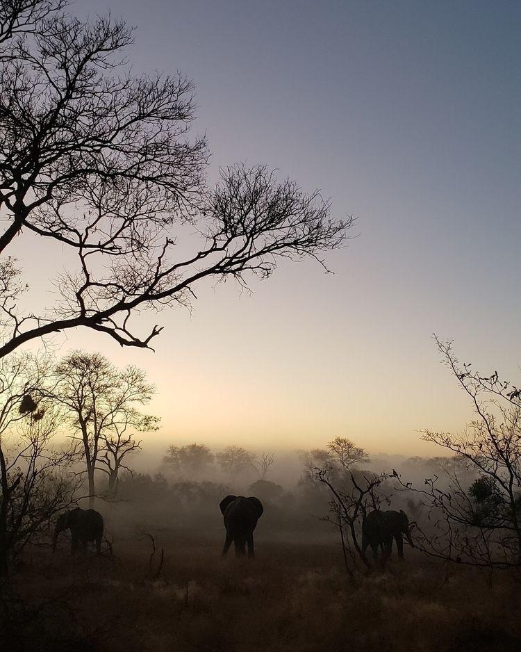 elephant, southafrica, photography - rochelleglobe | ello