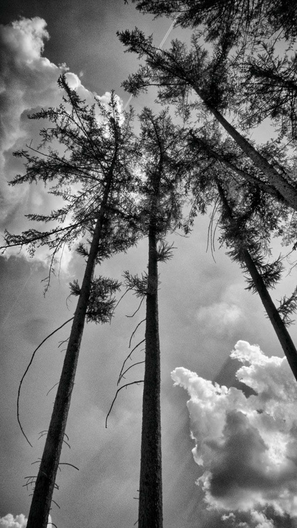 high - blackandwhitephotography - studio_zamenhof | ello