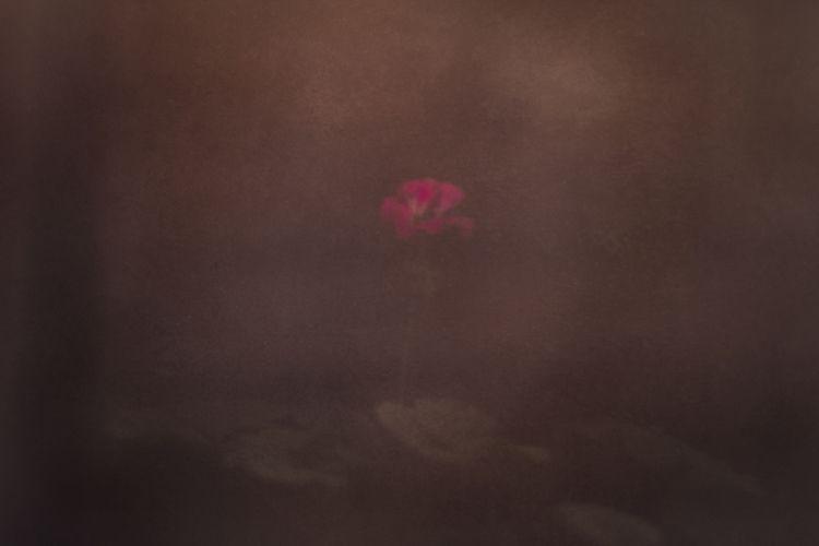 Veiled beauty - artphotography, photography - urbanart | ello