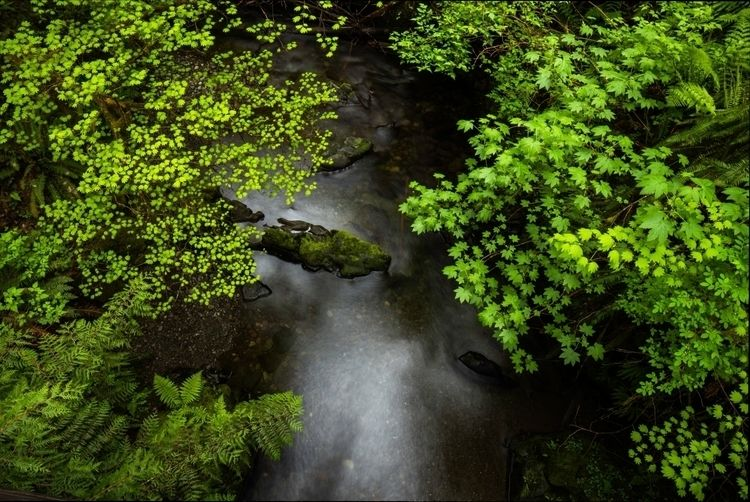 Smooth water, bright leaves - naturephotography - illuminationsfromtheattic | ello