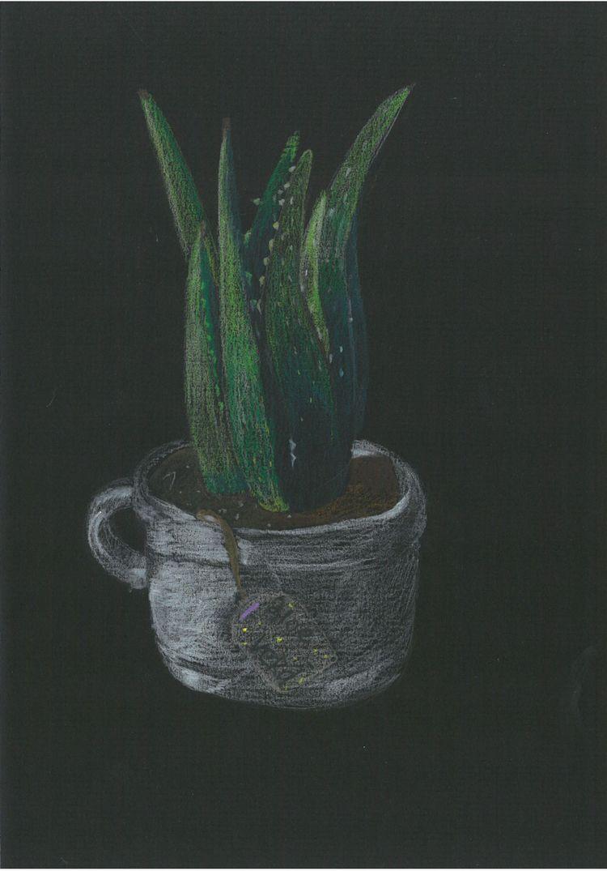 Aloe Colored Pencil Black color - hor199611 | ello