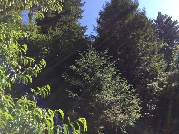 trees house - ellobent | ello
