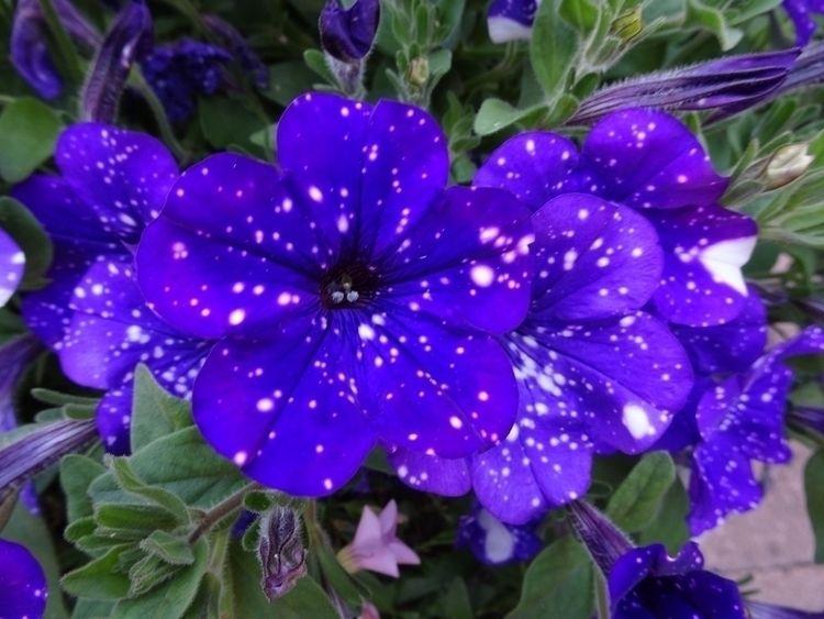 Blossoms Expanding Universes fi - astrobederkesa | ello
