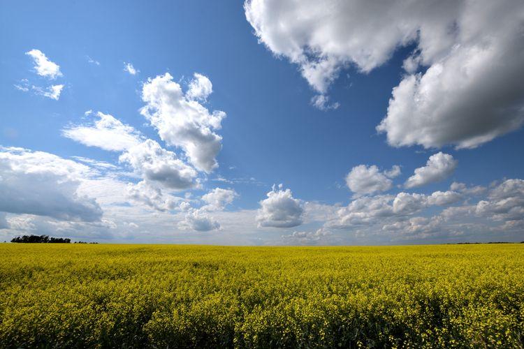 Summer days prairie Love loathe - camwmclean | ello