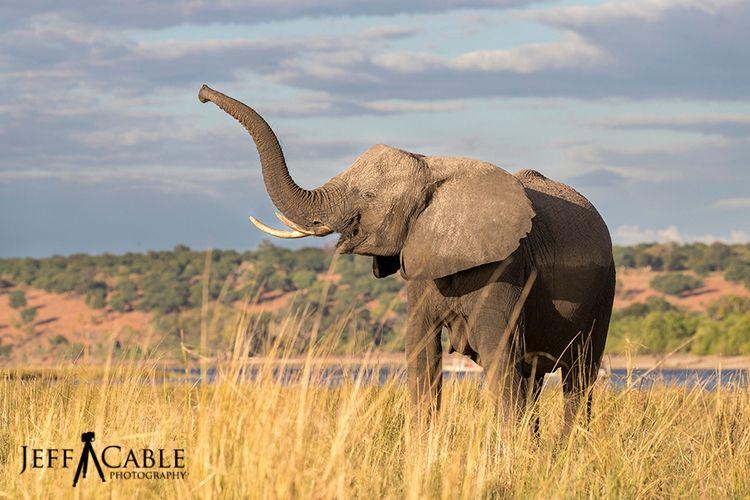 Yesterday World Elephant Day ph - jeffcablephotography | ello