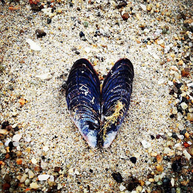 Morning Love 9/12/ 2015 Seabrig - delmar | ello