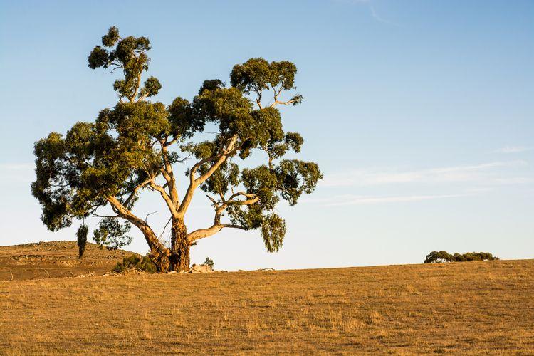 australien, natur, bush - folkogsteder | ello