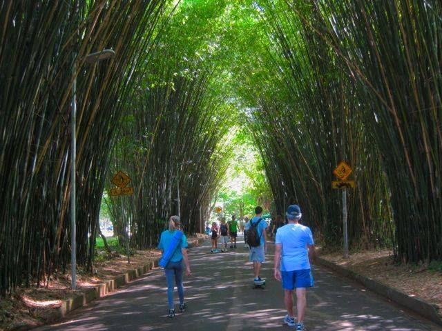 Bambuzal Parque Ibirapuera em S - antoniomg | ello